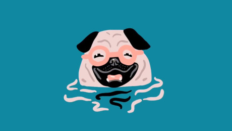Swimming Pug gallery